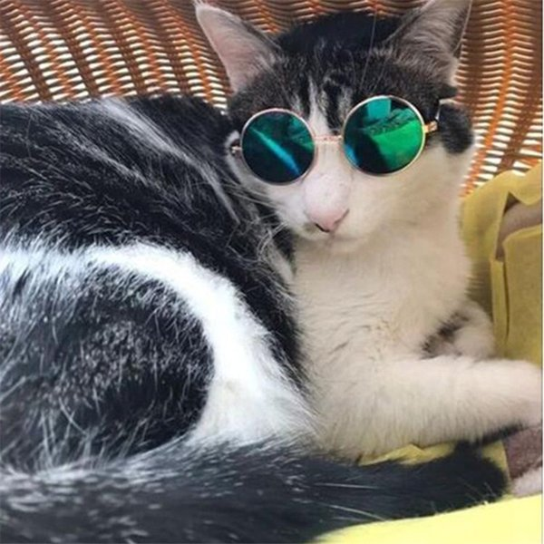Small Pet Dogs Cat Glasses fashion Glasses Sunglasses Eye-wear Protection Pet Cool Glasses Pet Photos Props color randomly