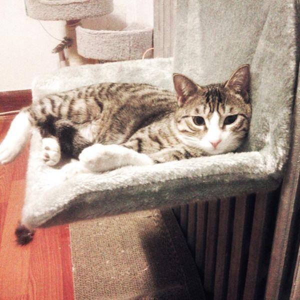 Mascotas Gato Cama Cojín Cuna Hamaca Colgante Radiador Extraíble Kitty Cama de dormir Acogedor Dispositivo de sujeción ajustable