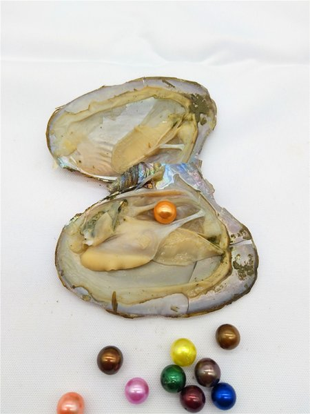 best selling Free Shipping Oysters With 3A 8.5-11mm Edison Pearl Inside,Rainbow Colored Edison Pearl Oysters,Mini Monsters,Monster Oysters