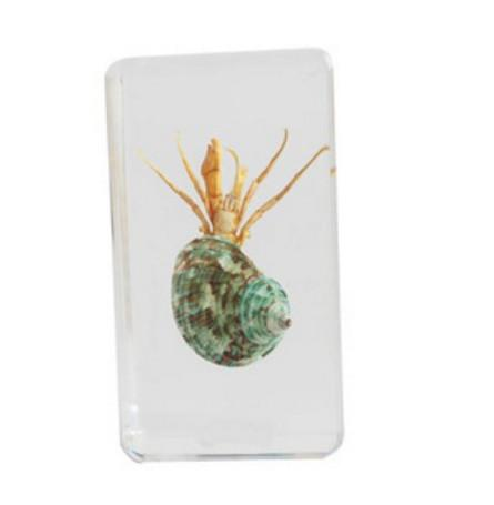 Wrinkled Hermit Crab Specimen Resin Embedded Crab Paperweight Transparent Mouse Block Student Popular Biology Science Learning&Education Kit