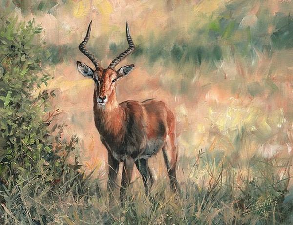 Arte moderno de la pared de la lona de Artwork-impala-Unframed para la decoración del hogar y de la oficina, pintura al óleo, pinturas animales, marco