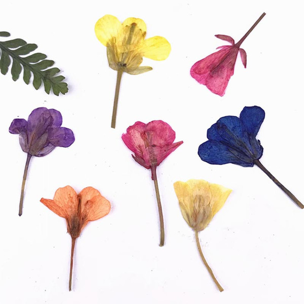 Rape Flower DIY Teaching Specimens pendants And Handicrafts Dried Press flowers Raw Materials Factory For Nail Ornament 120PCS Free Shipment
