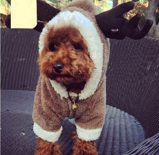 Elk turned small dog clothes winter warm pet four legs Clothing hoodie dog coat jacket pet costumes Teddy Bichon Frise apparel