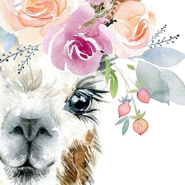 Animal Alpaca Llama Bebe lindo de impresión arte enmarcado cartel 9x7 pulgadas
