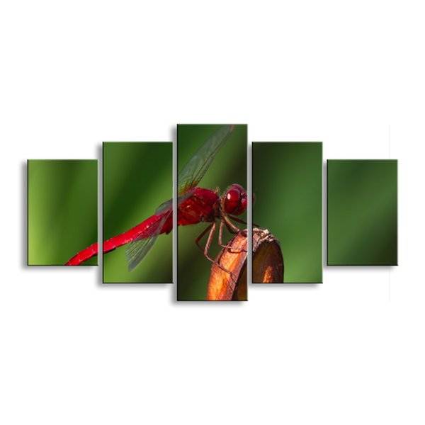 5 pieces high-definition print dragonfly canvas painting poster and wall art living room picture QIT5-011