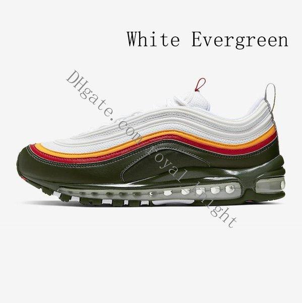 branco Evergreen