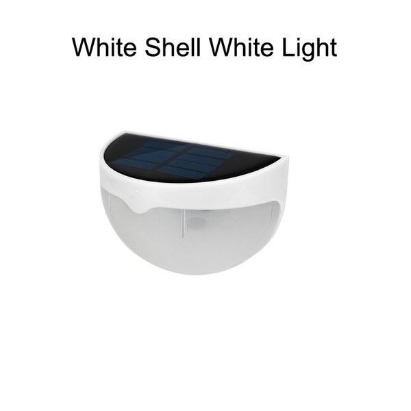 White Shell White Light