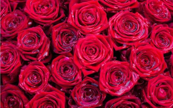 Compre Papel De Parede Moderno Para Sala De Estar Linda Romântico E Delicado Amor Rosa Vermelha Flor Tv Parede De Fundo De Wallpaper1688 2171