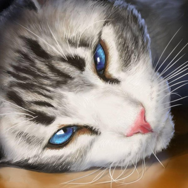Sleeping cat 5D Diy full diamond painting painted color cat pet 3D photo cross stitch embroidery rhinestone gift pearl mosaic decoration