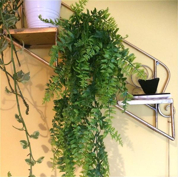 5 Fourchette Feuilles Artificielles En Plastique Vigne Mur Suspendu Jardin Salon Club Bar Décoré Faux Feuilles Plante Verte Ivy P25