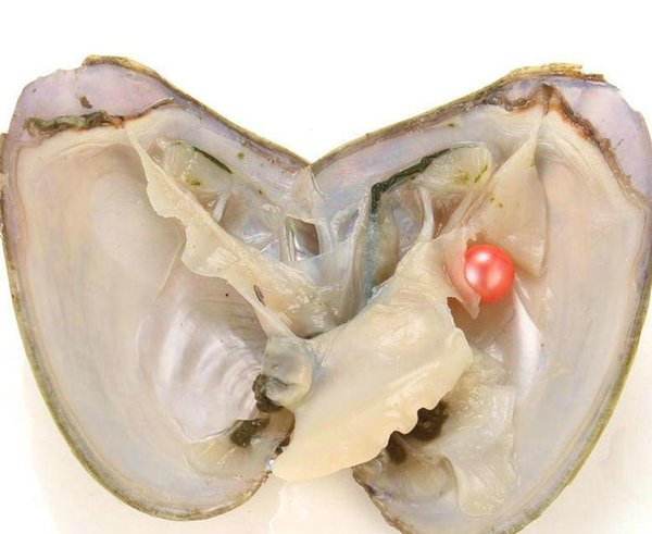 RED Fancy Gift Akoya High quality cheap freshwater shell pearl oyster with vacuum packaging