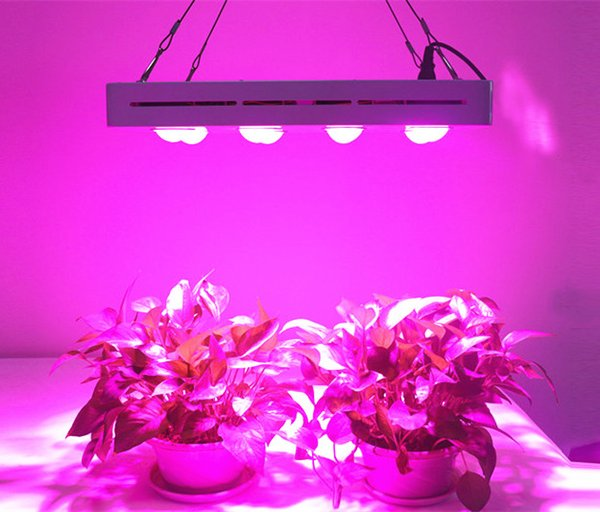 2019 Hot Sale Led Grow Light 1200w Hydroponic Full Spectrum For Vegetable Flower Indoor Hydroponic Us Eu Uk Au Plug 1000w Grow Light Grow Light