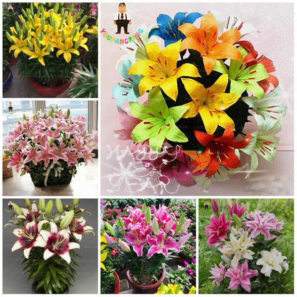 100 pcs/ bag Hybrid Daylily Flowers seeds Bonsai Hemerocallis Lily Outdoor & Indoor Seeds Plant Home Garden Supplies for Flower Pot