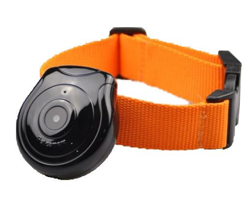 New Pet\'s Eye View Camera for dogs cats Digital Clip-On Collar Pet Video Digital Camera Cam