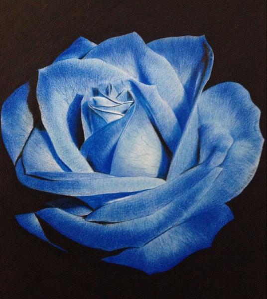 Güzel Açık Mavi Osiria Gül Çiçek Tohumları Ev Bahçe Bitkileri Dekor Hediye * Paket Başına 100 Parça Tohumları *
