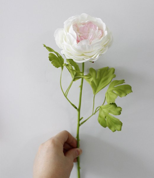 rosa-Center