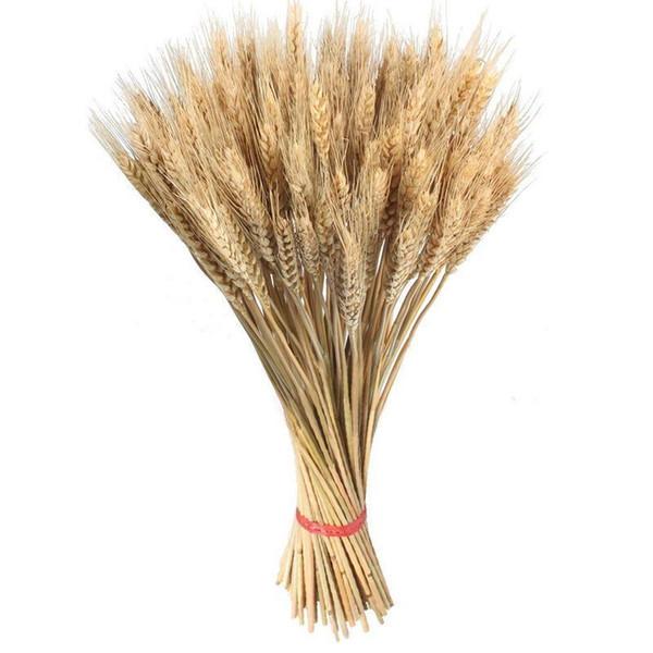 100 piezas orejas de trigo flores secas plantas de jardín colores primarios naturales orejas de trigo decoración de la boda accesorios de tiro Boutonniere