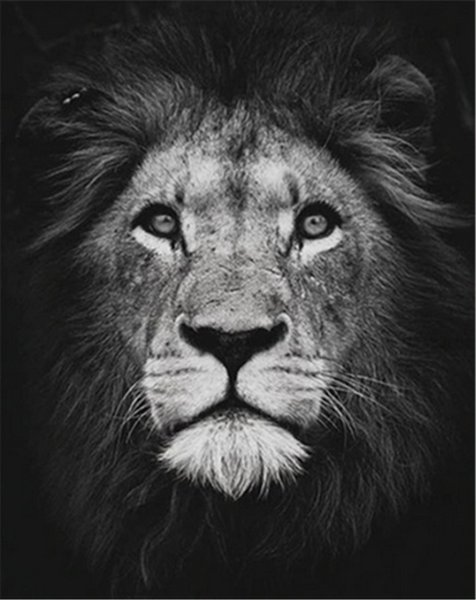 Digital Oil Painting DIY Oil Painting Home Wall Decor Festival Gift -Black Lion Head 16x20 inch Paint by Numbers for Adults Beginner