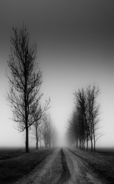 Black and White Dirt Track through a Row of Trees Art Silk Print Poster 24x36inch(60x90cm) 089