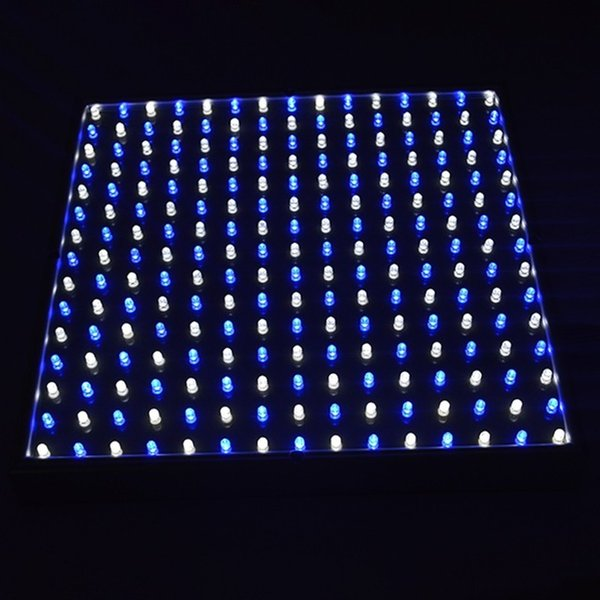 Yayan Renk: Mavi ve beyaz ışık
