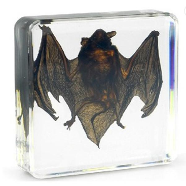 top popular Bat Specimen Acrylic Resin Embedded Bat Biology Paperweight Transparent Mouse Block Kids New Type Learning&Teaching Appliance Science Kits 2021