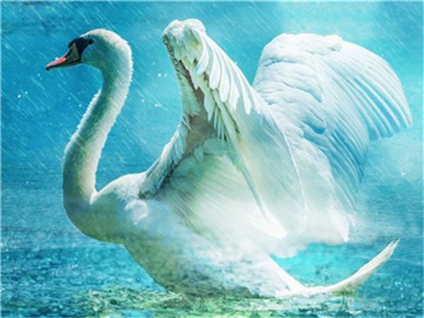 16x20'' White Swan Bathing in the River Water DIY Paint By Numbers Kits On Canvas Art Acrylic Oil Painting
