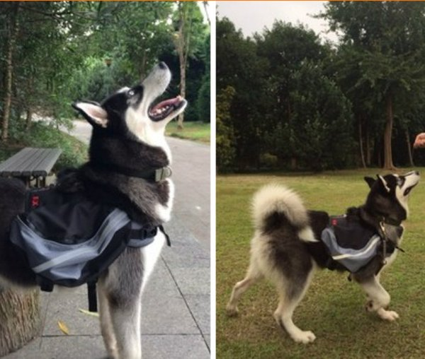 GRAY   Dog Saddle Backpack Reflective Bag Safety at Night Pack Bag Outdoor Hiking Camping Training Pet Carrier