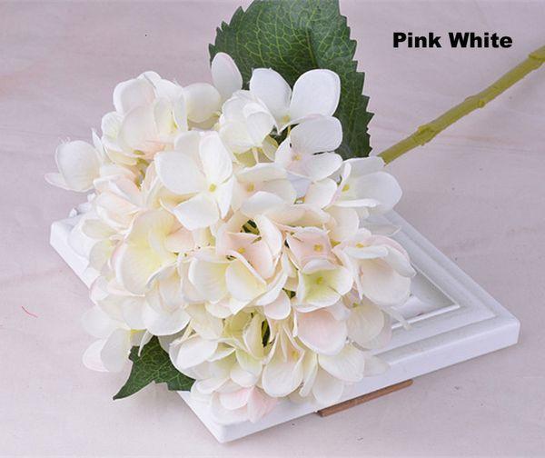 Rosa Bianco