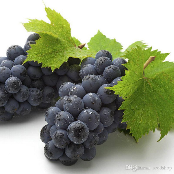 100 pcs grape seeds chinese cheap fruit grape seeds very sweet easy grow fruit seeds for home garden planting