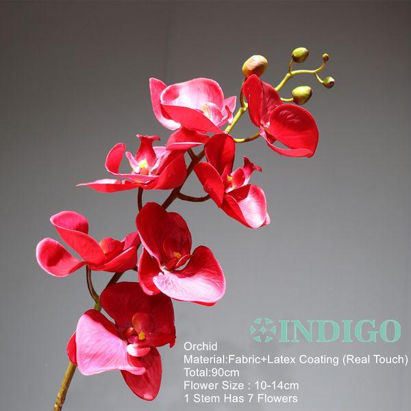 1 Orchidee staminali