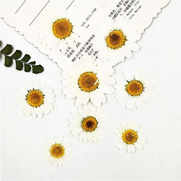 Kids birthday party supplies dye White Chrysanthemum / Daisy Dried Press flower specimen DIY Handmade Material Diameter 120pcs Free Shipment