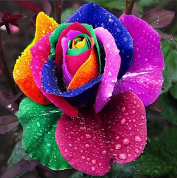 2019 Ultimi semi di fiori di rose di nozze economici economici Semi di giardino gialli popolari 100 Pezzi per confezione Spedizione gratuita Home Decoration Semi di fiori