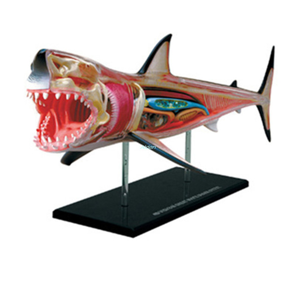 KAWS 4D Master Jason Freeny Fashion Internal Anatomy Shark Transparent Skeleton Creative PVC Action Collectible Model Toy Long 15CM BOX G333
