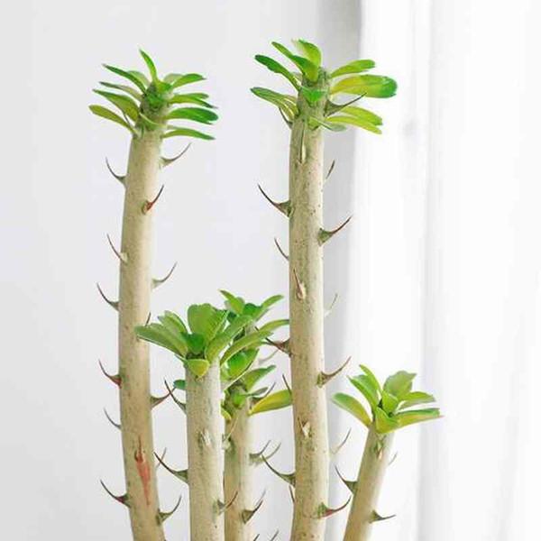 Nodic Maison Intérieur Hôtel Resturant Bureau Décoration Artificielle Barbed Cactus Decoracion Plantes Faux En Plastique Feuilles