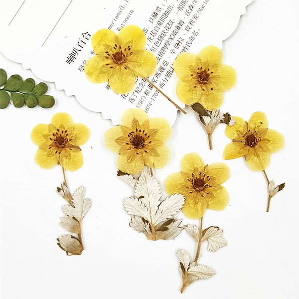 New Wedding / Christmas Small Pressed Flowers Golden Rose On Stems, Real Dried Flowers For Press Desk Lamp Decoration 100Pcs Free Shipment