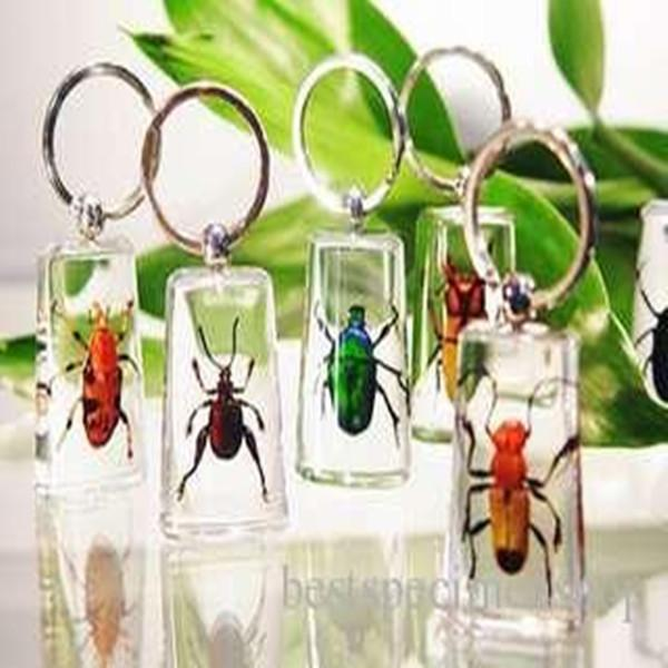 best selling Real Bugs Insect Specimens Acrylic Resin Embedded Keychain Paperweight Transparent Mouse Key Rings Decoration New Fashion Toys&Gifts&Crafts