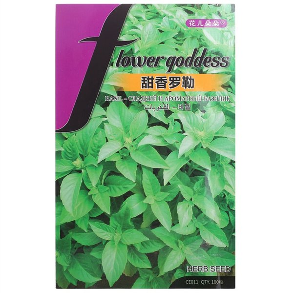 Fleurs Doux Basilic Vert Graines De Vanille Maison Balcon / Bureau En Pot 100 Graines / Sac