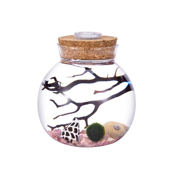 "4.3"" LED Aquarium Kit-Round Glass Jar with Cork, Rhodonite Gravel, Living Moss Ball and Shells"