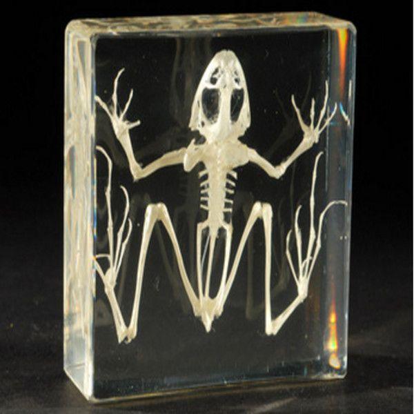 best selling Frog Skeleton Biology Specimen Acrylic Resin Embedded Animal Skeleton Paperweight Transparent Mouse Kid New Science Learning&Teaching Kits