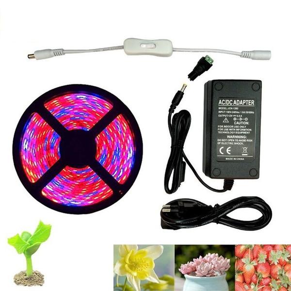 Lámpara de cultivo Full Spectrum LED Strip Flower phyto lamp 5m Impermeable Rojo azul 4: 1 para Greenhouse Hydroponic + Power adapter