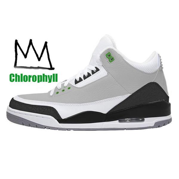 15 chlorophyll