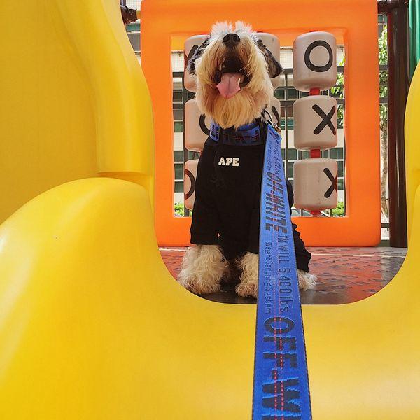 Coleiras de cão da marca Trelas Maré de alta qualidade Arneses trelas Schnauzer Teddy Schnauzer Pet Cat Dog Trelas com trava de cinto ajustável 3 cores