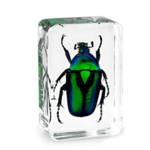 Unicorn Green Rose Chafer Beetle Specimen Resin Embedded Learning&Education Toys Transparent Mouse Paperweight Kids Science&Discovery Kits