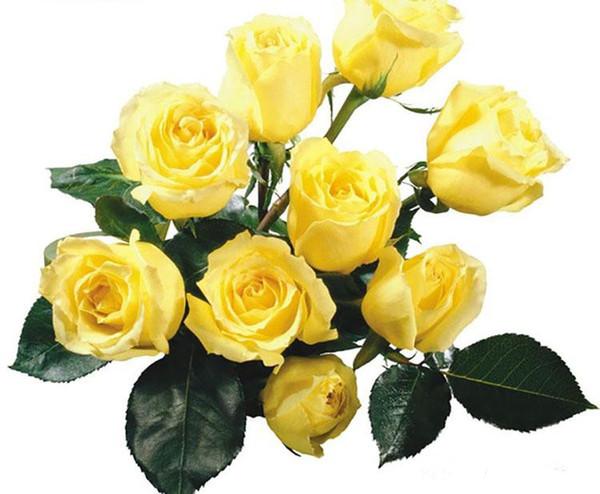Rosa Sementes Frete Grátis Colorido Rainbow Rose Sementes Roxo Vermelho Preto Branco Rosa Amarelo Verde Azul Rosa Sementes 100 pçs / saco
