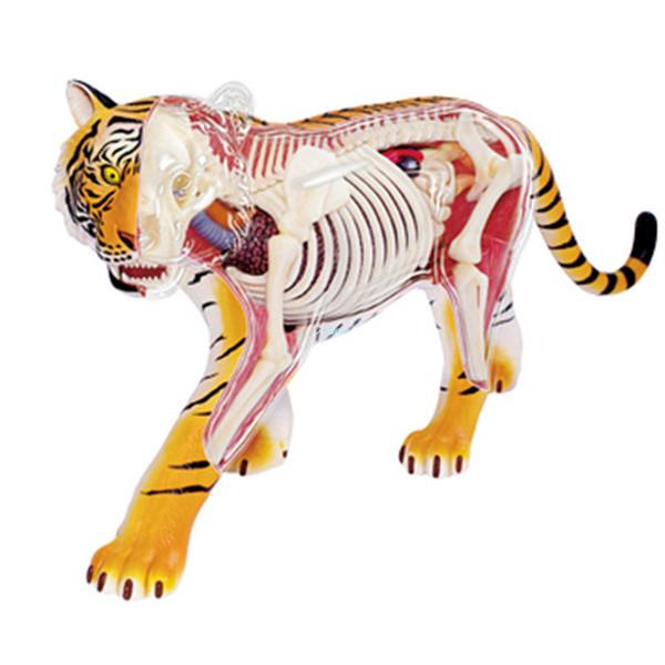KAWS 4D Master Jason Freeny Fashion Internal Anatomy Tiger Transparent Skeleton Creative PVC Action Collectible Model Toy 17CM BOX G335