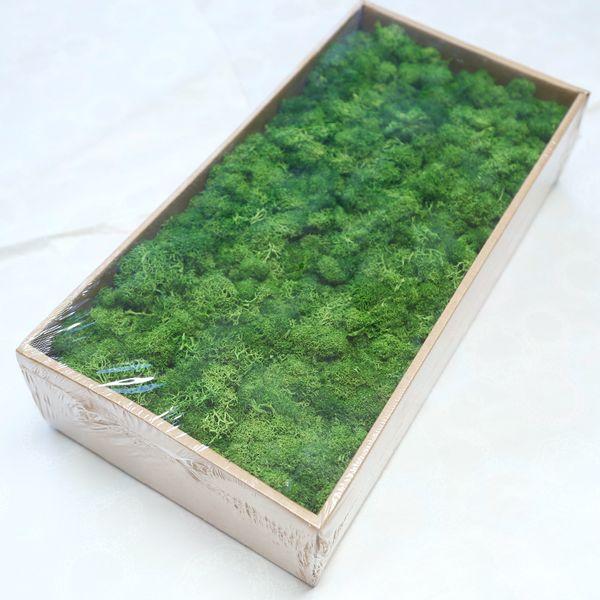 plante verte artificielle de haute qualité faux immortelle fleur mousse herbe salon maison mur décoratif fleur bricolage mini-accessoires