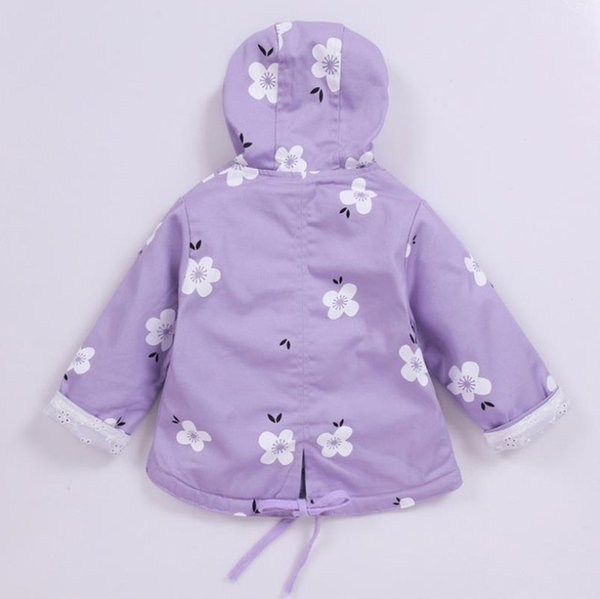 Lavender12M