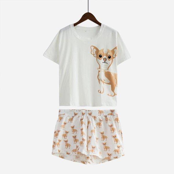 Weißer Chihuahua-Satz