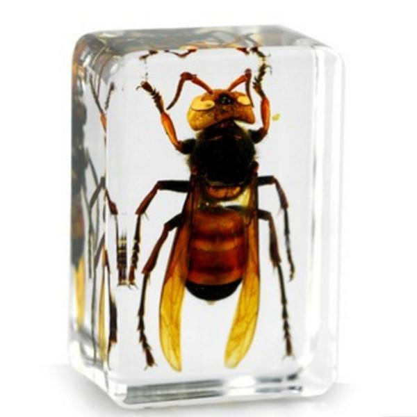 Real Tiger Wasp Specimen Acrylic Resin Embedded Nature Insects Block Transparent Mouse Paperweight Kids Biology Science&Discovery Toys&Gifts