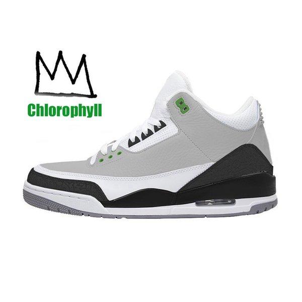 A1 chlorophyll